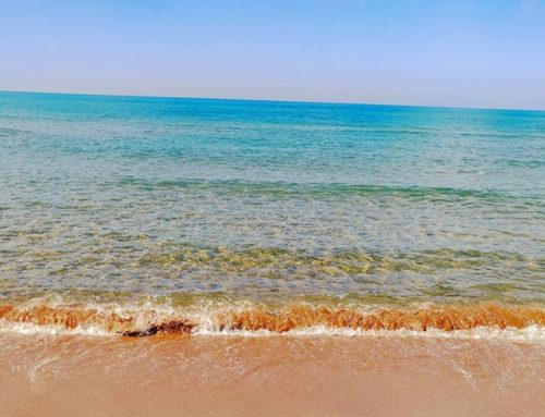 I don't need an exotic beach, Sabaudia April 17th 😎•••#sea #sabaudia #italy #sand #travel #travelling #traveler #instatravel #trip #photooftheday #lifeofadventure #instapassport #instatraveling #mytravelgram #travelgram #travelingram #igtravel #instalife #ig_worldphoto #traveling #travelblog #instago #travelstoke