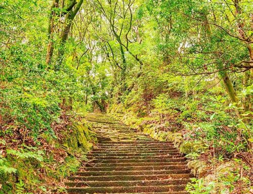 The stairs for heaven •••#sasebo #park #green #maidirebanzai #stairs #nature #theoutdoorfolk #nature_lovers #naturephotography #natureshots #outdoors #nature_good #getoutside #earthgallery #tree_magic #tree #natureworld_photography #beautyofnature #in2nature #ig_naturelovers #ig_nature #natureswonder #ig_naturevibes #naturegram #mothernature