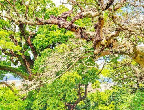 Can you feel the vibes of the nature ? •••#fukuoka #japan #tree #green  #nature #theoutdoorfolk #nature_lovers #naturephotography #natureshots #outdoors #nature_good #getoutside #earthgallery #tree_magic #tree #natureworld_photography #beautyofnature #in2nature #ig_naturelovers #ig_nature #natureswonder #ig_naturevibes #naturegram #mothernature
