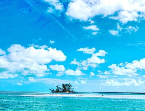 Cast away in Bimini  #travels #instatravel #travelling #travelphotography #travelgram #island #travelislife #travelblog #bahamas🇧🇸 #travel #travelers #travelawesome #bahamas #traveling #beach #travel_captures #travelholic #traveler #traveltheworld #bimini