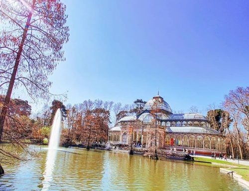 Take a walk at Parque del Ritiro 🏙️🤙 #palaciodecristal #travels #travel #sunny #madrid #sunnydays #sunlight #garden #traveldiaries #travelphotography #travelholic #traveldeeper #travelstoke #traveladdict #travelingram #park #travelblogger #travelphoto #travelblog #traveling #sunnyday #travelgram #traveler #travellife #travelbug