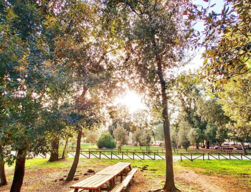 Autumn colours #sabaudia #parconazionaledelcirceo #natura #autumn #travelawesome #nature_perfection #naturelovers #nationalpark #travelingram #travelholic #park #sunglare #bench #worldtraveler #naturelover #traveladdict #instatraveling #travelislife #traveltheworld #igtravel #travelblogger