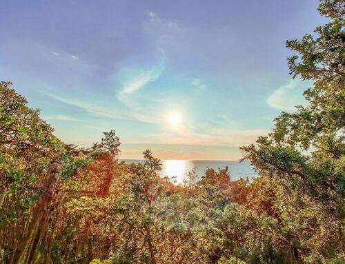 Sea vibes 😎 🤙#sabaudia #italy #natura #Italia #beachvibes  #nature_perfection #green #travelblogger #instatraveling #traveltheworld #naturelovers #sunnydays #sea  #beachday #natureshots #mothernature #seaside #travelingram #beaches #igtravel #naturelover #sunlight #sunglare #sun #clouds